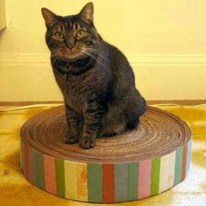 Cardboard Cat Scratching