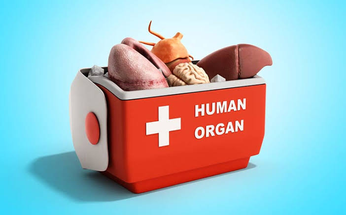 Everything you Need to Know about Organ Transplants