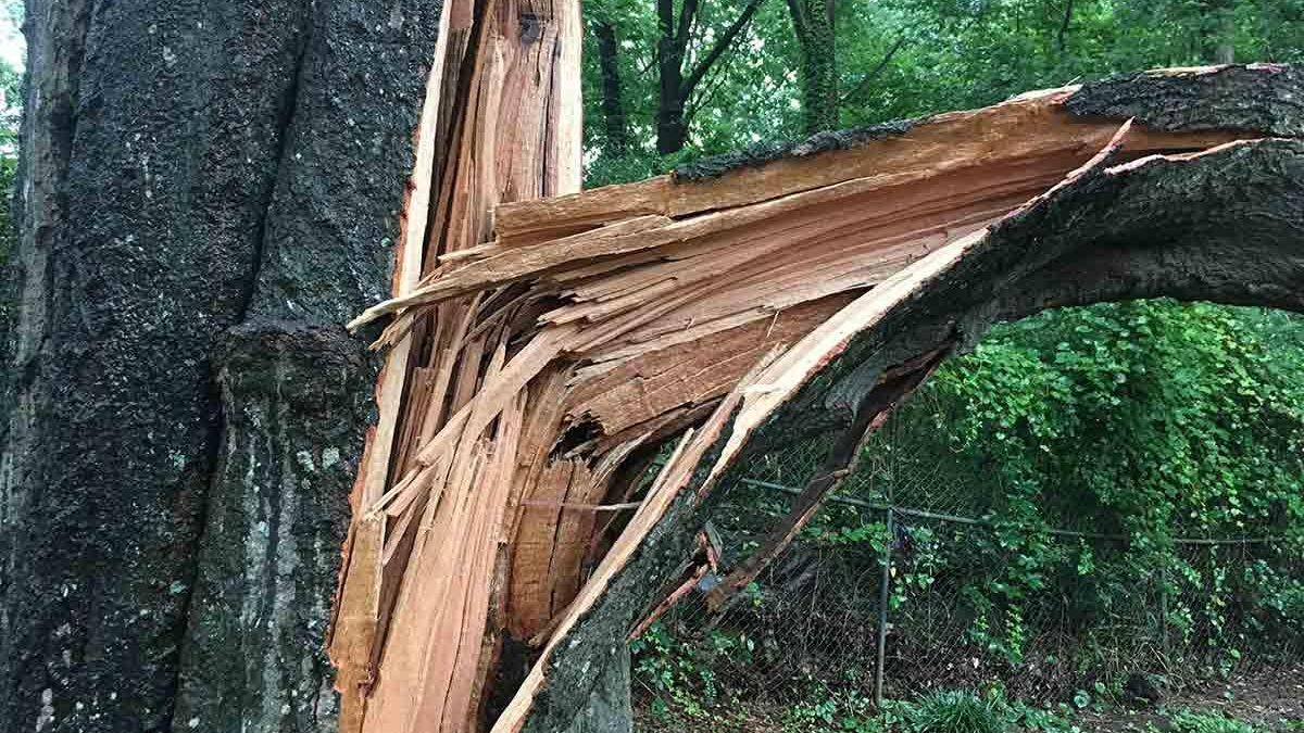 Can you Repair a Broken Tree Branch?