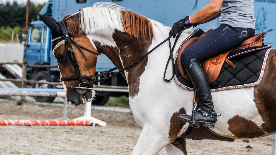 Tips to Make Your Horse Riding Experiences More Memorable