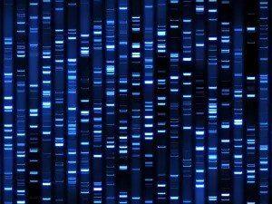 DNA Profiling Tests