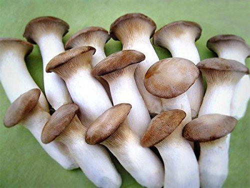 Global Pleurotus Eryngii Market Research Report: Ken Research