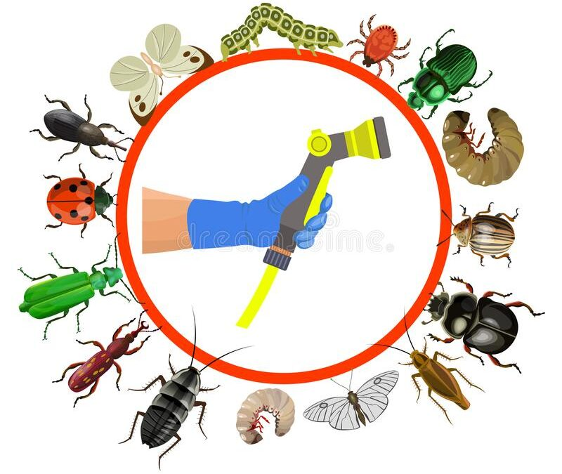 Different Types of Pests and their Dangers