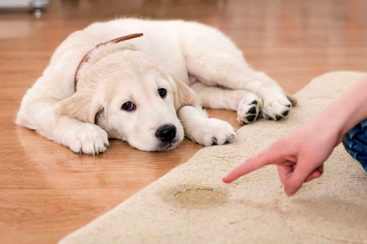 Five Effective Ways You Can Potty Train Your Dog