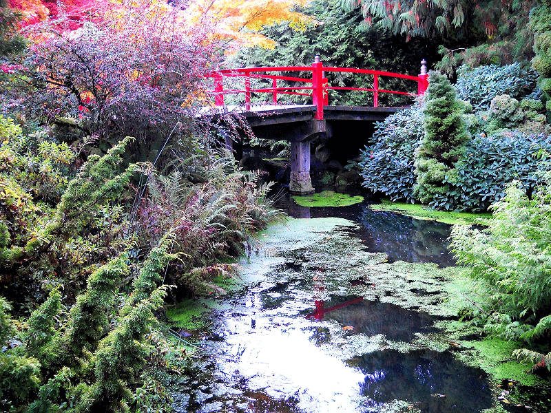 Red bridge over a pond, surrounded by lush greenery at Kubota Garden