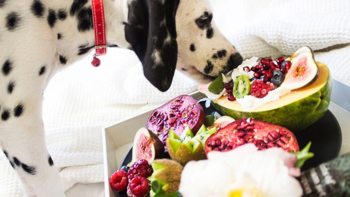 Four Tested Ways to Choose the Best and Healthy Pet Foods