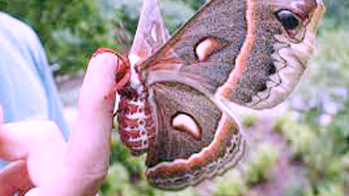 Frequently asked questions, answers, interesting information about butterflies Moths