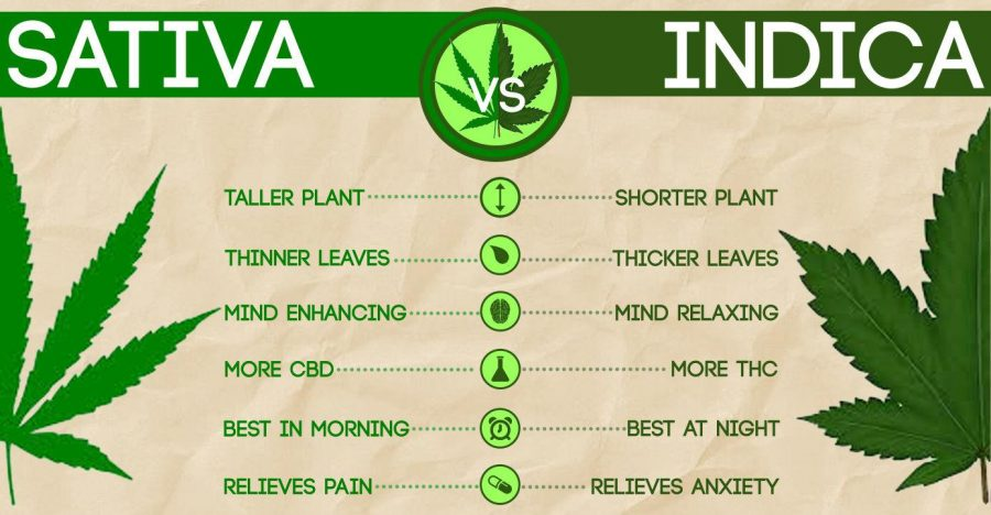 A Simple But Complete Guide to Different Cannabis Strains - AtoAllinks